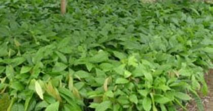 Africa's Seed Problem Persist Amid Nigeria Based Company Leading Quality Seeds Ranking