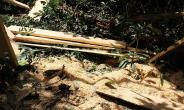 Armed Illegal Loggers Intimidate Forest Guards