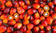 Ghana To Host Africa Sustainable Palm Oil Forum