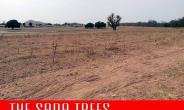 Video: Shocking revelation on SADA trees project