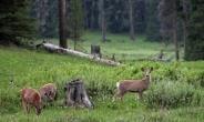 Western Wildlife Corridor Achieve More In CREMAs