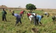 Alliance For Science Ghana Congratulates Farmers As We Mark Farmers' Day