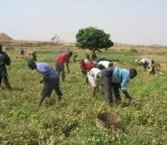 Alliance For Science Ghana Congratulates Farmers As We Mark Farmers' Day