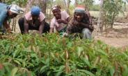 Agriculture Is The Way To Become Wealthy But It Can't Happen The Way Our Parents Practiced, IITA Says