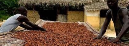 Cocoa Producer Price: H.E Mahama Just Has An