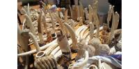 A picture taken on August 9, 2013 shows part of the 700kg of ivory seized on August 6 by the Togolese police.  By Emile Kouton (AFP)